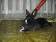 Продам кролика декоративного не дорого!!!